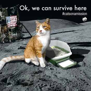 Cats on a mission - On the Moon