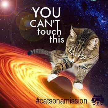 Blackhole - Cats on a mission | Space cats