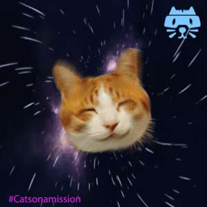 Space cat animation - Cats on a mission